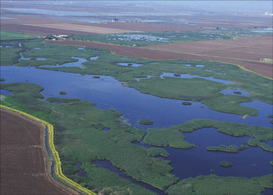 Aerial view of wetland sin Butte County, California.